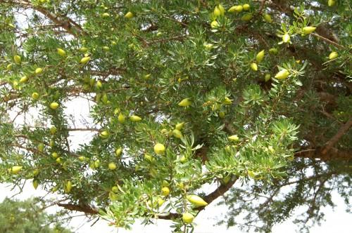 http://images.onlc.eu/jardinsexotiqueNDD//12420829300.jpg